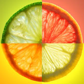 Citrus Slice — Stock Photo