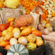Autumn pumpkins and gourds display - Stock Photo