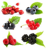 Summer berries isolated on white — Stock Photo