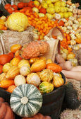 Autumn pumpkins and gourds display — Stock Photo