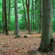 Green forest — Stock Photo #19391103
