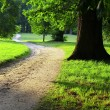 Path in a green park in late afternoon — Stock Photo #19391629