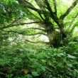 Lush jungle with sunbeams — Stock Photo