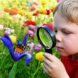 Child observing a butterfly - Stock Photo