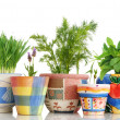Herb garden — Stock Photo #19397427