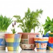 Herb garden - Stock Photo