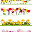 Spring flower borders — Stock Photo