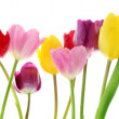 Spring tulip flowers in a row — Foto de Stock   #19398107