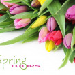 Spring tulip flowers — Stock Photo