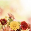 Colorful mums flowers on warm bokeh background — Stock Photo #19398441