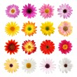 The perfect daisy collection — Stock Photo #19399581