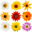 Daisy collection — Stock Photo #19399999