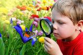 Barnet observerar en fjäril — Stockfoto