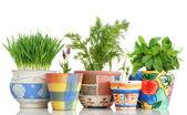 Giardino delle erbe — Foto Stock