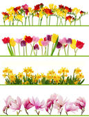 Spring flower borders — Stockfoto