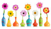 Daisy flowers in vases — Stock Photo