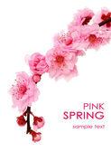 Spring cherry flowers — Stock Photo