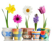 Wiosna w doniczkach — Zdjęcie stockowe