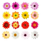 The perfect daisy collection — Stock Photo