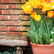 Tulips and old wall — Stock Photo