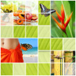 Tropical summer collage — Stock Photo