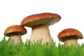 Wild mushroom family — Stock Photo