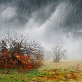Fall landscape in rain and fog — Stock Photo