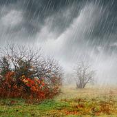 Fall landscape in rain and fog — Photo