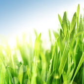 Fresh spring summer grass in sunshine under blue sky — Stock Photo
