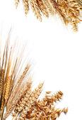 Harvest frame — Stock Photo