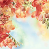 Spring freesia flowers on bokeh background — Stock Photo