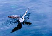 Sea bird flying free — Stock Photo