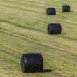 Hay bales wrapped in plastic — Stock Photo
