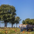 Cart with pumpkins in the field — Stok fotoğraf