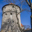 Fortification tower in the old center of Tallinn — Stock Photo