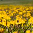 Spring meadow — Stock Photo #31174603