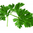 Parsley — Stock Photo #31668197