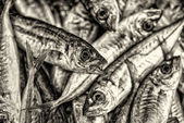 Tile of fishes — Stock Photo