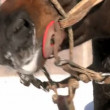 Stock Video: Horse in Winter