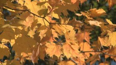 осенние цвета — Стоковое видео