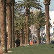 Palms on Las Vegas Blvd — Stock Video