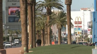 Palms on Las Vegas Blvd — Stok video