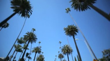 Palmiye ağacı sürücü — Stok video