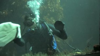 Scuba diver cleaning aquarium tank — Stock Video