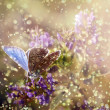 Butterfly in rain and sunset with purple wild flower - Stock Photo