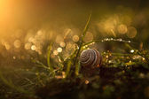 Snail in the grass after rain — Stock Photo