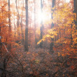 Autumn forest in sunset — Stock fotografie