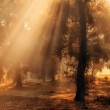 Morning lights in the forest — Stock Photo