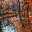 Beautiful river in the forest — Stock Photo #19341993
