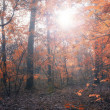 Forest in sunset — Stock Photo